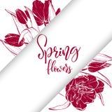 Nakreślenie tulipanów liniowy okwitnięcie Obraz Stock
