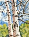 Nakreślenie dwa drzewa Obrazy Royalty Free
