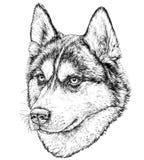 Nakreślenie husky pies Zdjęcia Royalty Free