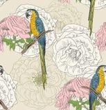Nakreślenie papuga Obraz Stock