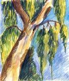 Nakreślenie pojedynczy drzewo Zdjęcia Stock