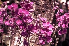 Nakreślenie wiosna Fotografia Stock