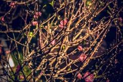 Nakreślenie wiosna Zdjęcia Stock