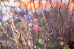 Nakreślenie wiosna Obraz Royalty Free