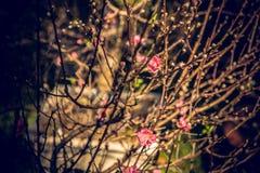 Nakreślenie wiosna Obrazy Stock
