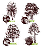 Nakreślenia drzewo Opuszcza projekta pojęcie Zdjęcia Stock