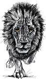 Nakreślenie duży męski Afrykański lew Fotografia Stock
