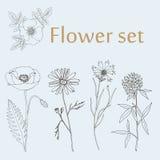 Nakreślenie kwiatu set Fotografia Royalty Free