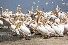 nakuru озера Стоковая Фотография