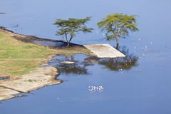 Nakuru National Park Landscape, Kenya Stock Photos