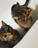 Nala und Lotti stockbilder