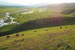 Nalati Grassland In Summer Stock Photography
