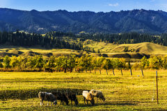 NaLaTi grassland in Xinjiang, China Royalty Free Stock Photo