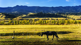 NaLaTi grassland in Xinjiang, China Royalty Free Stock Photography