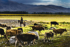 NaLaTi grassland in Xinjiang, China Royalty Free Stock Photography