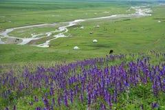 Nalati obszar trawiasty Fotografia Royalty Free