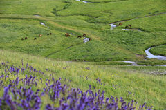Nalati obszar trawiasty w lecie Fotografia Royalty Free