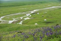 Nalati obszar trawiasty w lecie Obrazy Stock