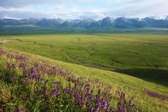 Nalati obszar trawiasty z śnieżnymi górami obrazy stock
