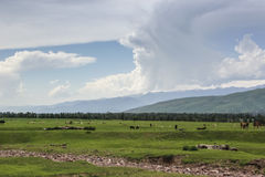 Nalati prairie Royalty Free Stock Image