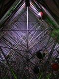 Nalbero -内部结构 免版税库存照片
