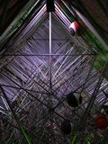Nalbero - Avond Interne Structuur Royalty-vrije Stock Foto's