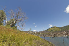 Nalcas National Reserve, Chilean Patagonia, Chile. Royalty Free Stock Photo
