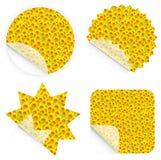 nalepka słonecznikowi detaliczne Zdjęcie Stock