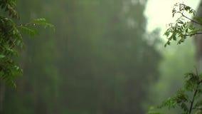 Nalewać deszcz karmy zbiory wideo