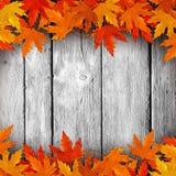 Nalewający na suchych liściach w jesieni drewnie Zdjęcie Royalty Free