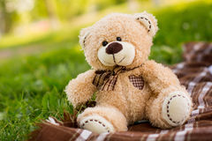 Nallebjörn på det gröna gräset Arkivfoton