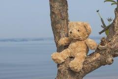 Nallebjörn som sitter på trädet arkivbild