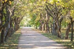 NAlley zieleni drzewa z ścieżką w środku fotografia royalty free