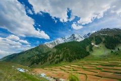 Naltar dal nordliga Pakistan Arkivfoto