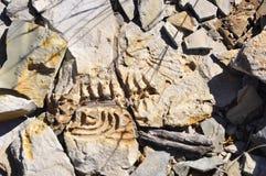 Namíbia: Descoberta do scelett do Mesosaurus na exploração agrícola de Spitzkoppe perto do KE imagem de stock royalty free