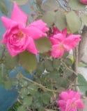 Nam bloem doorbladert toe De achtergrond, doorbladert royalty-vrije illustratie