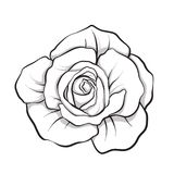 Nam bloem geïsoleerde getrokken overzichtshand toe Vectorillus van de voorraadlijn stock illustratie