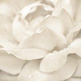Nam bloem met regendalingen toe royalty-vrije stock afbeeldingen