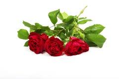 Nam bloem toe Royalty-vrije Stock Afbeeldingen