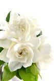 Nam bloem toe Royalty-vrije Stock Fotografie