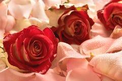 Nam bloemblaadje met dalingen toe Royalty-vrije Stock Afbeeldingen