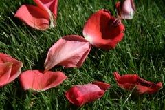 Nam bloemblaadjes op gras toe Royalty-vrije Stock Foto