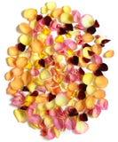 Nam bloemblaadjes op witte achtergrond toe royalty-vrije stock foto's