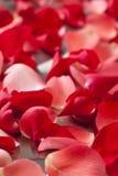 Nam bloemblaadjes toe Stock Afbeelding