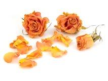 Nam bloemblaadjes toe Royalty-vrije Stock Foto's