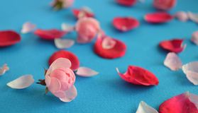 nam bloemblaadjes toe Royalty-vrije Stock Fotografie