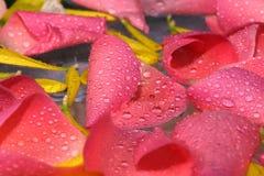 Nam bloemblaadjesachtergrond toe Royalty-vrije Stock Foto