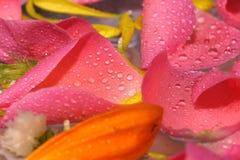 Nam bloemblaadjesachtergrond toe Royalty-vrije Stock Afbeeldingen