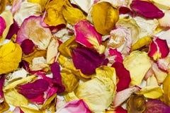 Nam bloemblaadjesachtergrond toe Royalty-vrije Stock Foto's