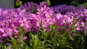 Nam bloemen in de tuin toe Stock Foto's